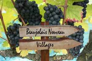 Beaujolais-Nouveau-eye