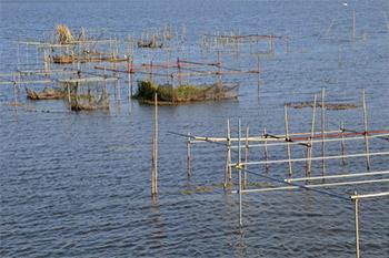 ウナギの価格は稚魚であるシラスウナギの漁獲量によって変わるそうです。